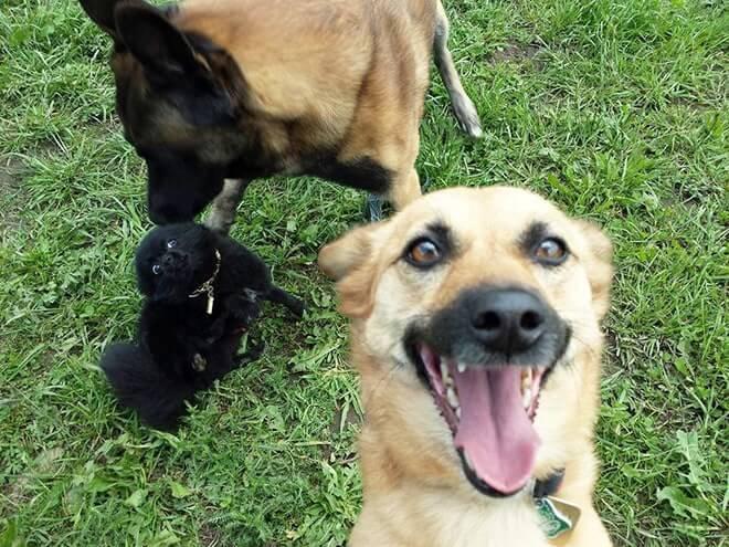 Dog Selfie7