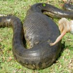 Largest Snakes