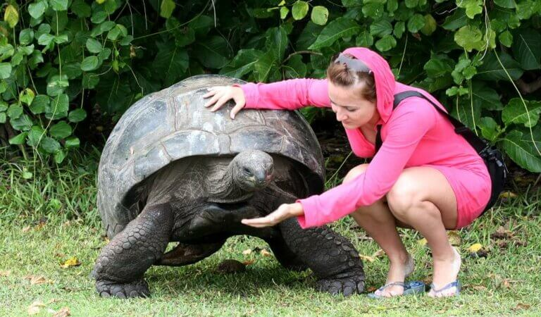 Top 10 largest turtles in the world