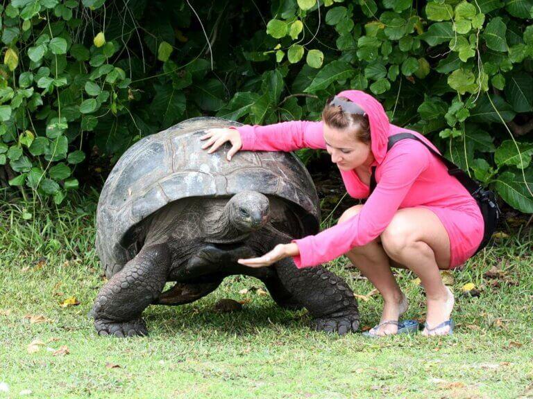 Largest Turtles