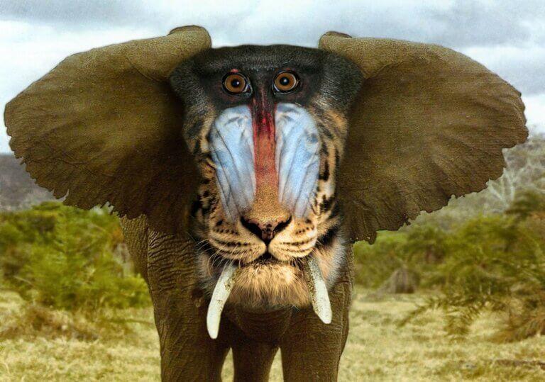 Rarest Animals