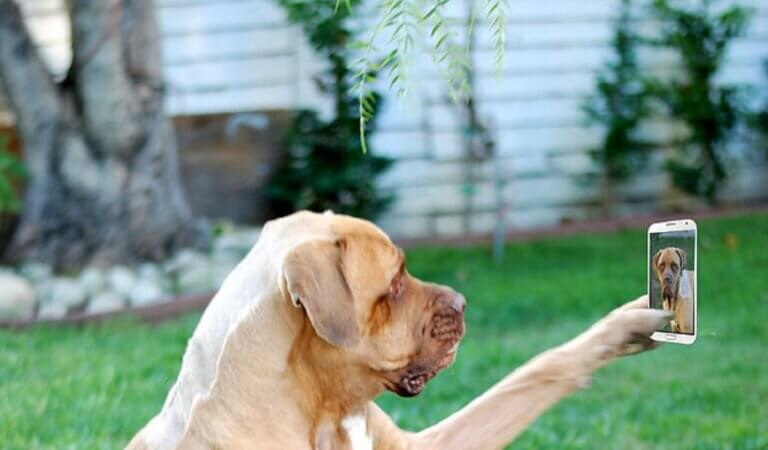 Dogs like to take selfies too