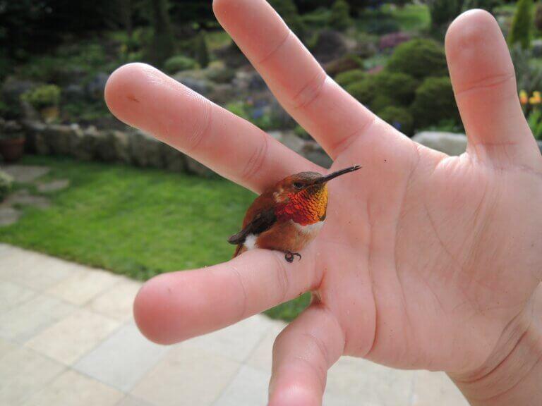 Smallest Birds