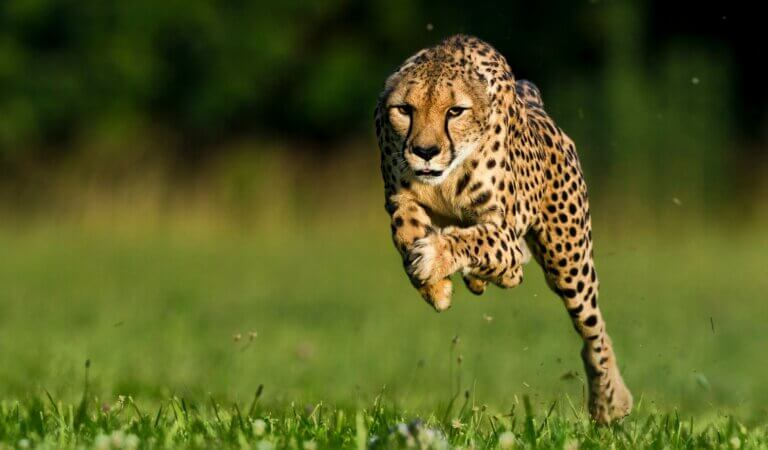 Top 10 fastest animals in the world