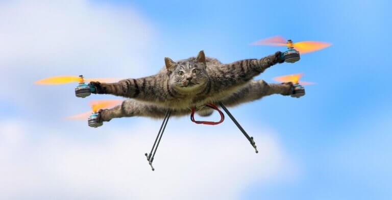 Fastest Cats