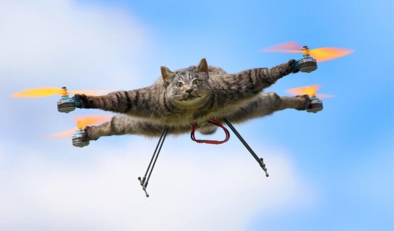 Top 10 fastest cats in the world
