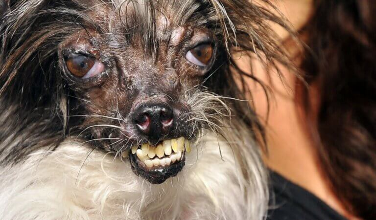 Top 10 ugliest animals in the world
