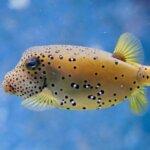 Poisonous Fish