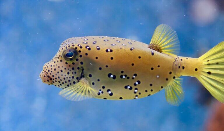 Top 10 Most Poisonous Fish in the world