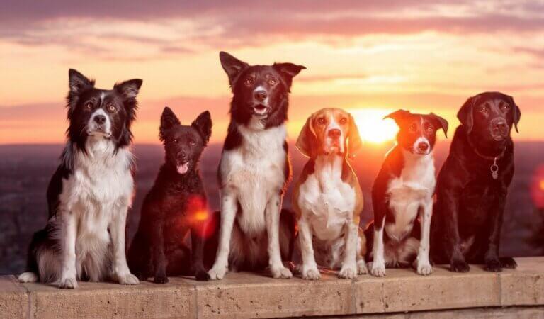 Top 10 friendliest dog breeds