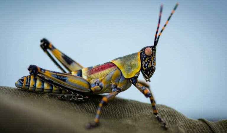 Top 10 fastest insects in the world