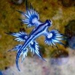 Most Amazing Fish