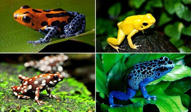 Top 10 most venomous creatures on the planet