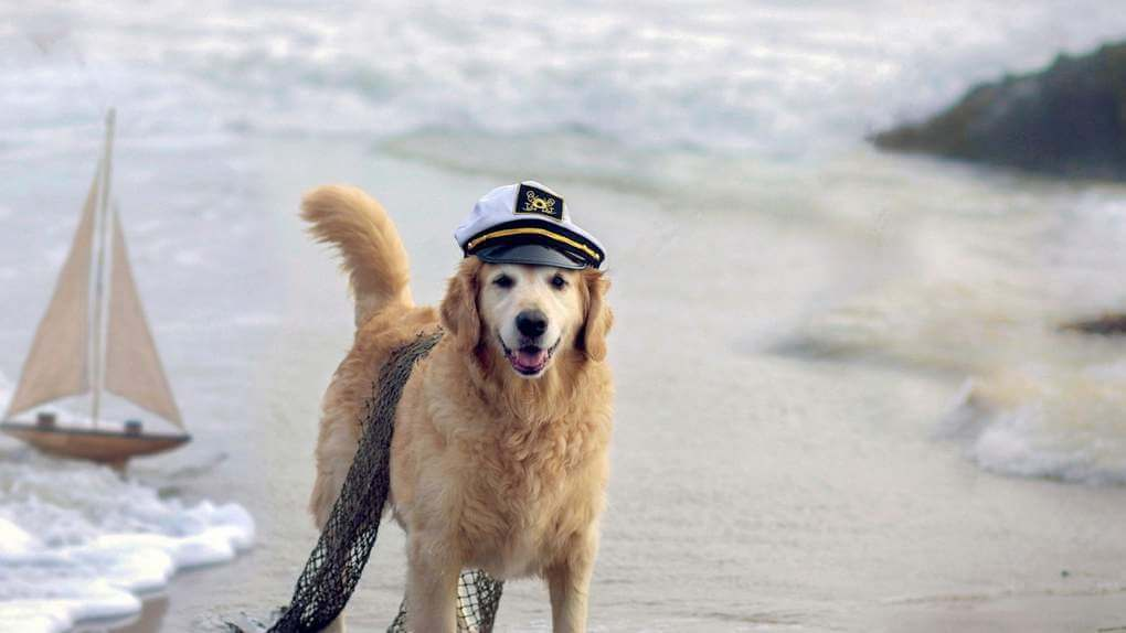 A Dog Saved 92 Sailors From Death