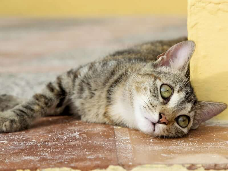 A Cat Prevented Gas Poisoning