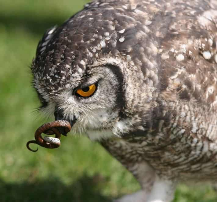 No Bird Will Tolerate Intrusion Into Its Home By Uninvited Guests