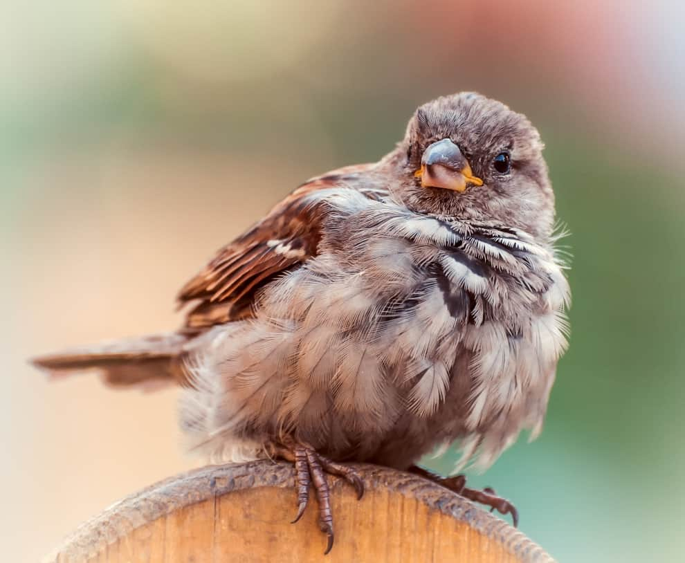 The Body Temperature Of Birds Is 8 Degrees Higher Than That Of Humans