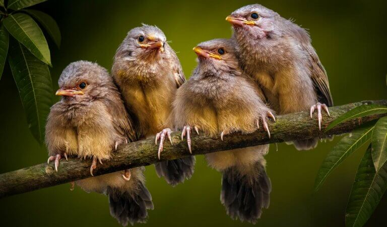 10 most amazing and interesting facts about birds