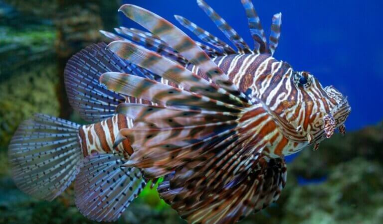 10 most dangerous marine animals in the world