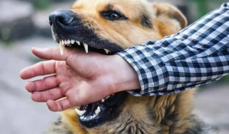 Top 10 scariest dog breeds in the world