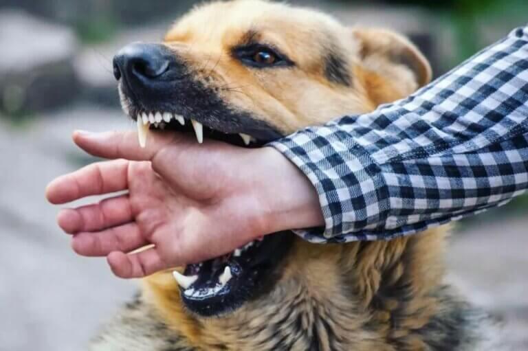 Scariest Dog