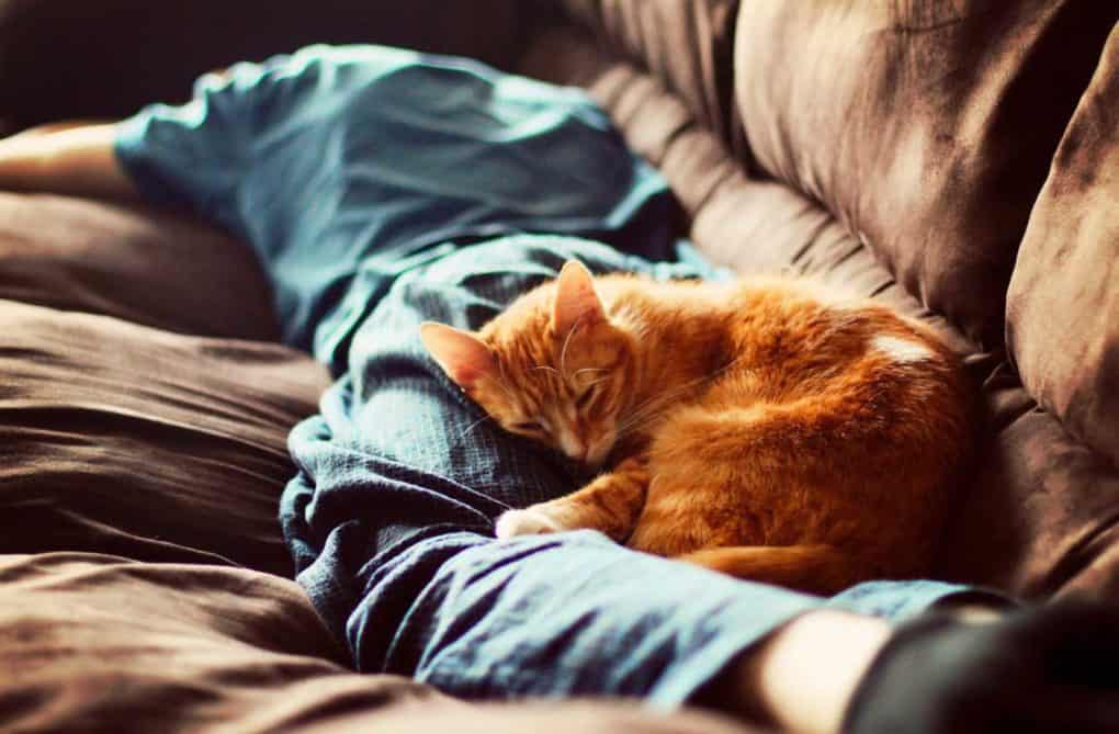 Cat Always Sleeps Close To You