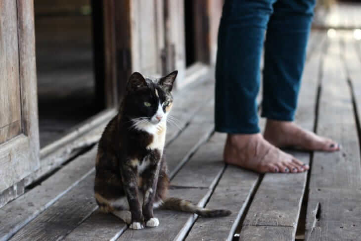 Cat Owners Prefer Solitude