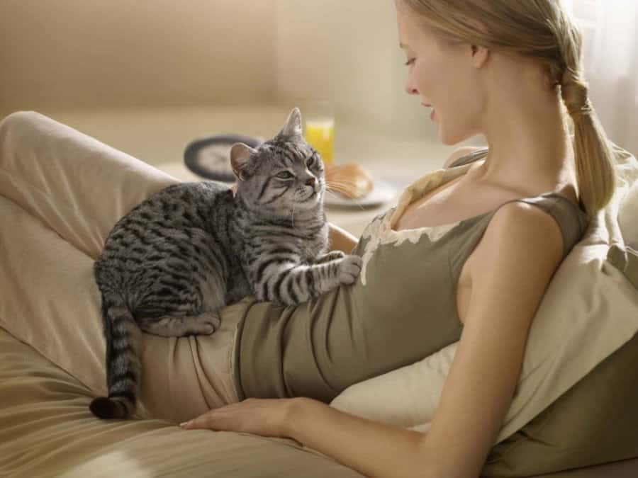 Cats Are Chosen By Sensitive People
