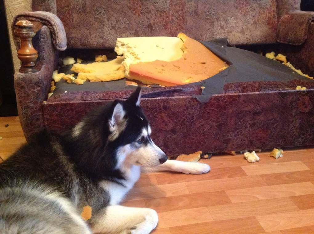 Do You Want To Change The Interior Get A Husky