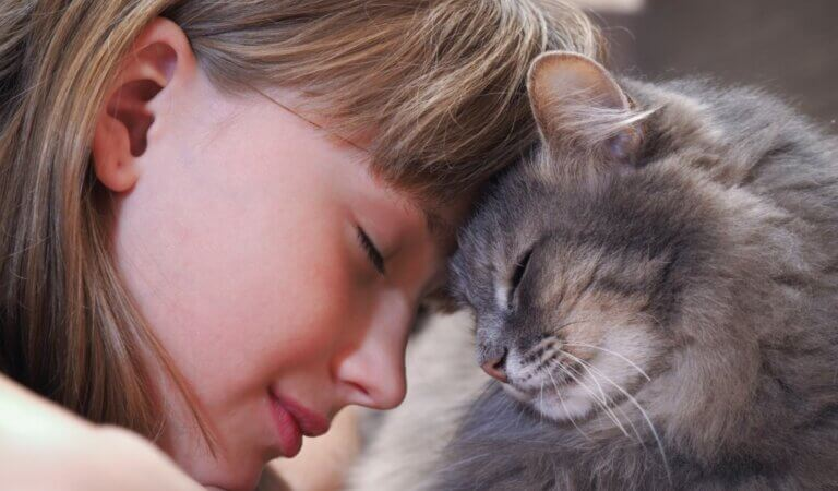 10 most affectionate and kind cat breeds