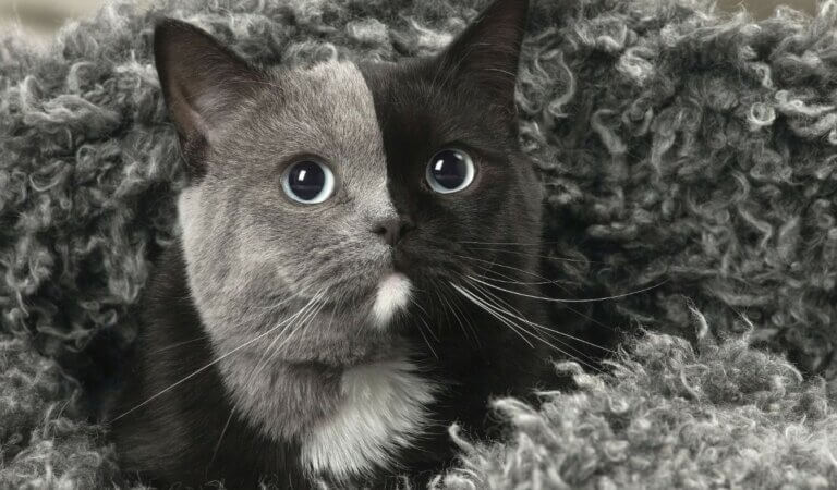 10 most famous cats